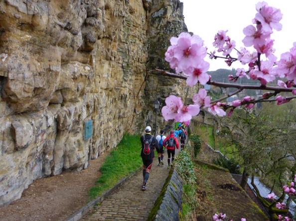trail-fleur